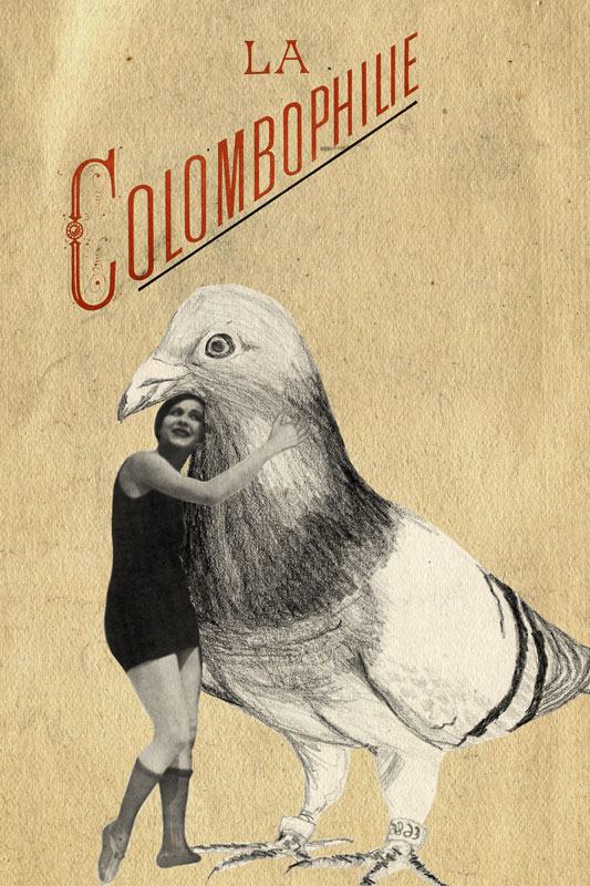 colombophilie