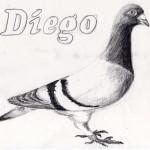 duif diego tekening