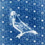 cyanotypie pigeon