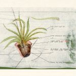 planten-3d-printen12
